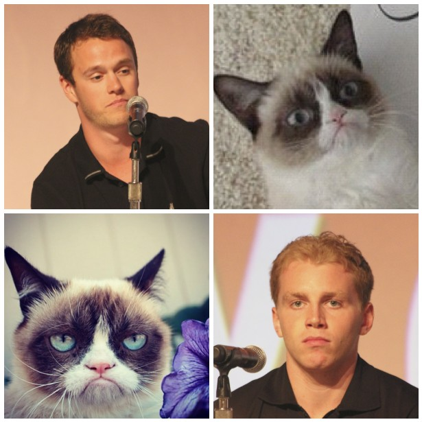 This is a team of Grumpy Cats / Image by the_mel